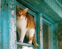 Gato rojo rústico en la ventana azul Fotos de archivo