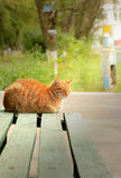 Gato rojo solitario en banco verde Foto de archivo libre de regalías