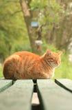 Gato rojo solitario en banco verde Fotografía de archivo libre de regalías