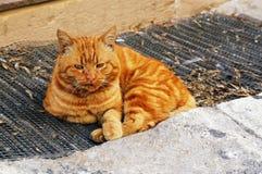 Gato rojo viejo que descansa después de lucha fotografía de archivo libre de regalías