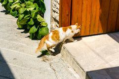 Gato rojo y blanco en el umbral de la casa en la ciudad de vacaciones homecoming imagenes de archivo