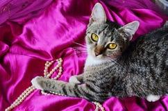 Gato romántico Foto de archivo libre de regalías