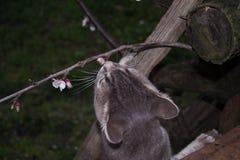 Gato romántico Imagenes de archivo