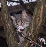 Gato romántico Fotos de archivo