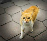 Gato rufo sin hogar Imagen de archivo libre de regalías