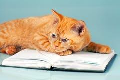 Gato sábio Fotos de Stock Royalty Free