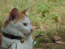 Gato só Foto de Stock