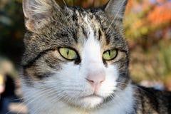Gato salvaje fotos de archivo libres de regalías