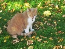 Gato salvaje salvaje fotografía de archivo
