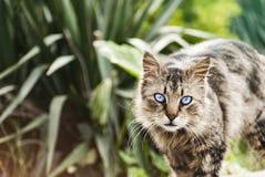Gato salvaje Imagen de archivo libre de regalías