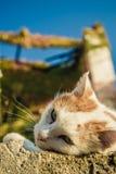 Gato salvaje blanco con los modelos amarillos Fotos de archivo