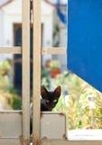 Gato salvaje de la calle, gato triste, gato enfermo de la calle, problema social Foto de archivo libre de regalías