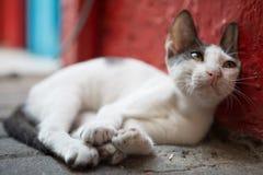 Gato salvaje de la calle que se relaja entre la litera que se inclina contra una pared Foto de archivo libre de regalías