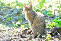 Gato salvaje en el delta de Danubio Imagen de archivo libre de regalías