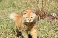 Gato salvaje en el hábitat natural imágenes de archivo libres de regalías