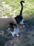 Gato salvaje feliz foto de archivo libre de regalías