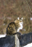 Gato salvaje hermoso Imagen de archivo libre de regalías