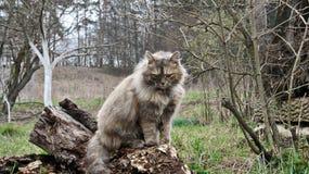 Gato salvaje hermoso Imagenes de archivo
