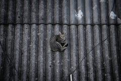 Gato salvaje que miente en un tejado imágenes de archivo libres de regalías