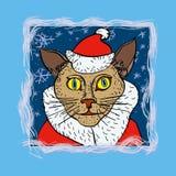 Gato santa Imagen de archivo libre de regalías