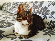Gato satisfecho Imágenes de archivo libres de regalías