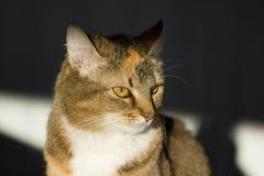 Gato, señora-gato Foto de archivo