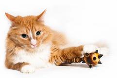 Gato, seguridad astuta Imágenes de archivo libres de regalías