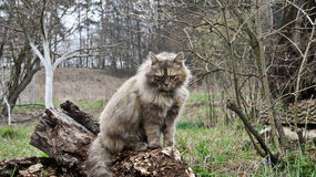 Gato selvagem bonito Imagens de Stock