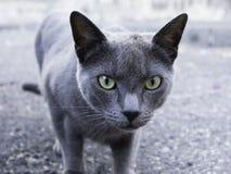 Gato selvagem na rua fotos de stock