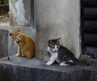 Gato selvagem na rua em Kuala Lumpur, Mal?sia fotografia de stock royalty free