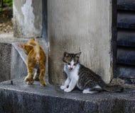 Gato selvagem na rua em Kuala Lumpur, Mal?sia fotos de stock royalty free