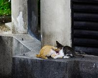 Gato selvagem na rua em Kuala Lumpur, Mal?sia imagens de stock