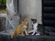 Gato selvagem na rua em Kuala Lumpur, Mal?sia imagem de stock