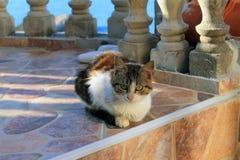 Gato serbio agradable en la orilla de mar adriática (Montenegro, Ulcinj, invierno) Imágenes de archivo libres de regalías