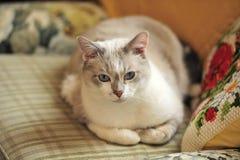 Gato serio precioso Imágenes de archivo libres de regalías
