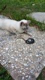 Gato & serpente Imagem de Stock Royalty Free