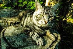 Gato severo Foto de archivo libre de regalías