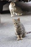 Gato severo em Tbilisi, Geórgia imagens de stock