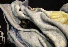 Gato siamés dormido foto de archivo