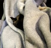 Gato siamés dormido fotos de archivo
