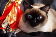 Gato Siamese Fotografia de Stock