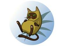 Gato siamese gordo Foto de Stock