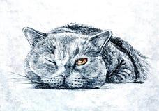 Gato Siberian macio Retrato Aquarela molhada de pintura no papel Arte ingénua Aquarela do desenho no papel ilustração royalty free