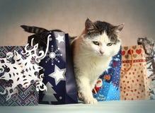 Gato siberiano entre bolso del presente del Año Nuevo de la Navidad Imagenes de archivo