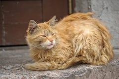Gato sin hogar Imagen de archivo libre de regalías