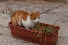 Gato sin hogar Imagenes de archivo
