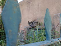 Gato sin hogar Foto de archivo