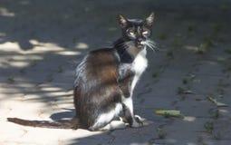 Gato sin hogar Imágenes de archivo libres de regalías