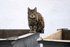 Gato sin hogar en el envase de la basura imagen de archivo libre de regalías