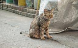 Gato sin hogar en la calle Fotografía de archivo libre de regalías